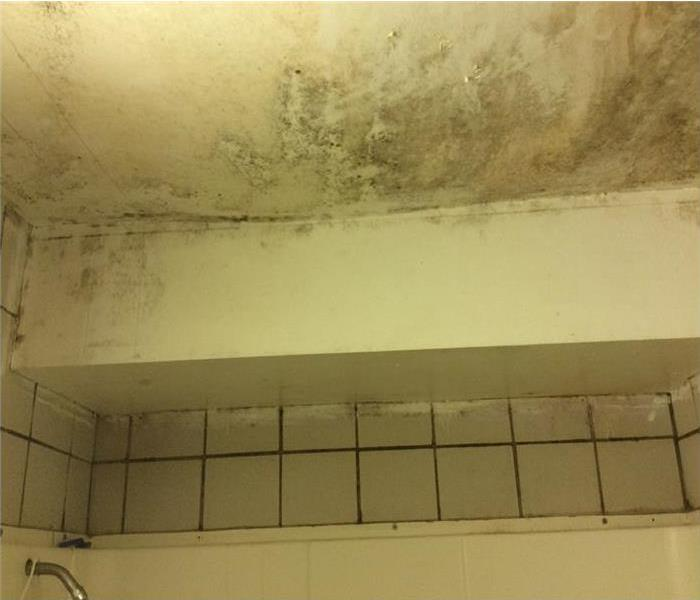 Dormitory Bathroom Mold in SW Orlando
