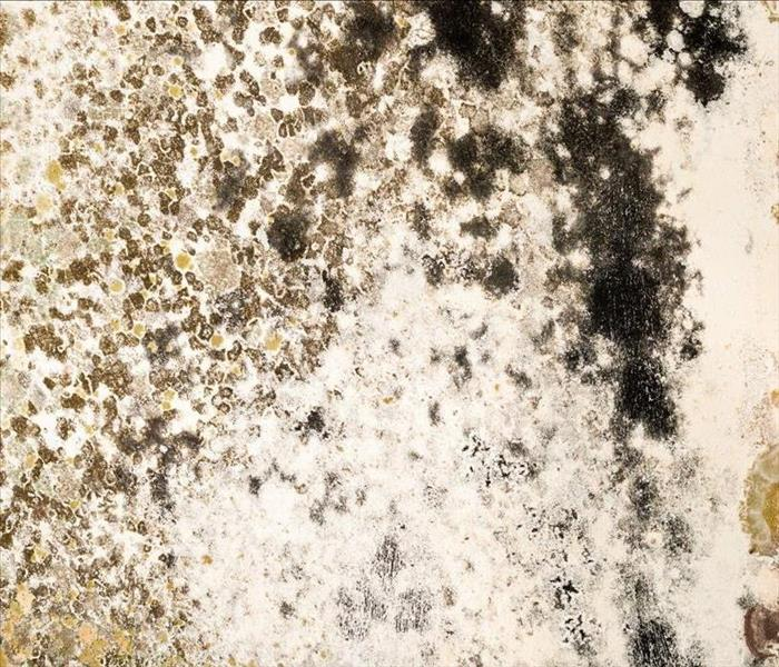 Mold Remediation Better Understanding Mold Growth in Your Home